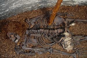 1300 tal mord arkeologi sverige qxz4xewpqdsvczoshtqxng