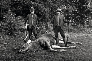 Algjakt sodermanland 1910 jagare med skjuten alg rjzu  waymcbxacwtvtc6w