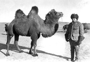 August larson mongoliet kamel 1avm9uf9hg7xlnkrl1d2aw