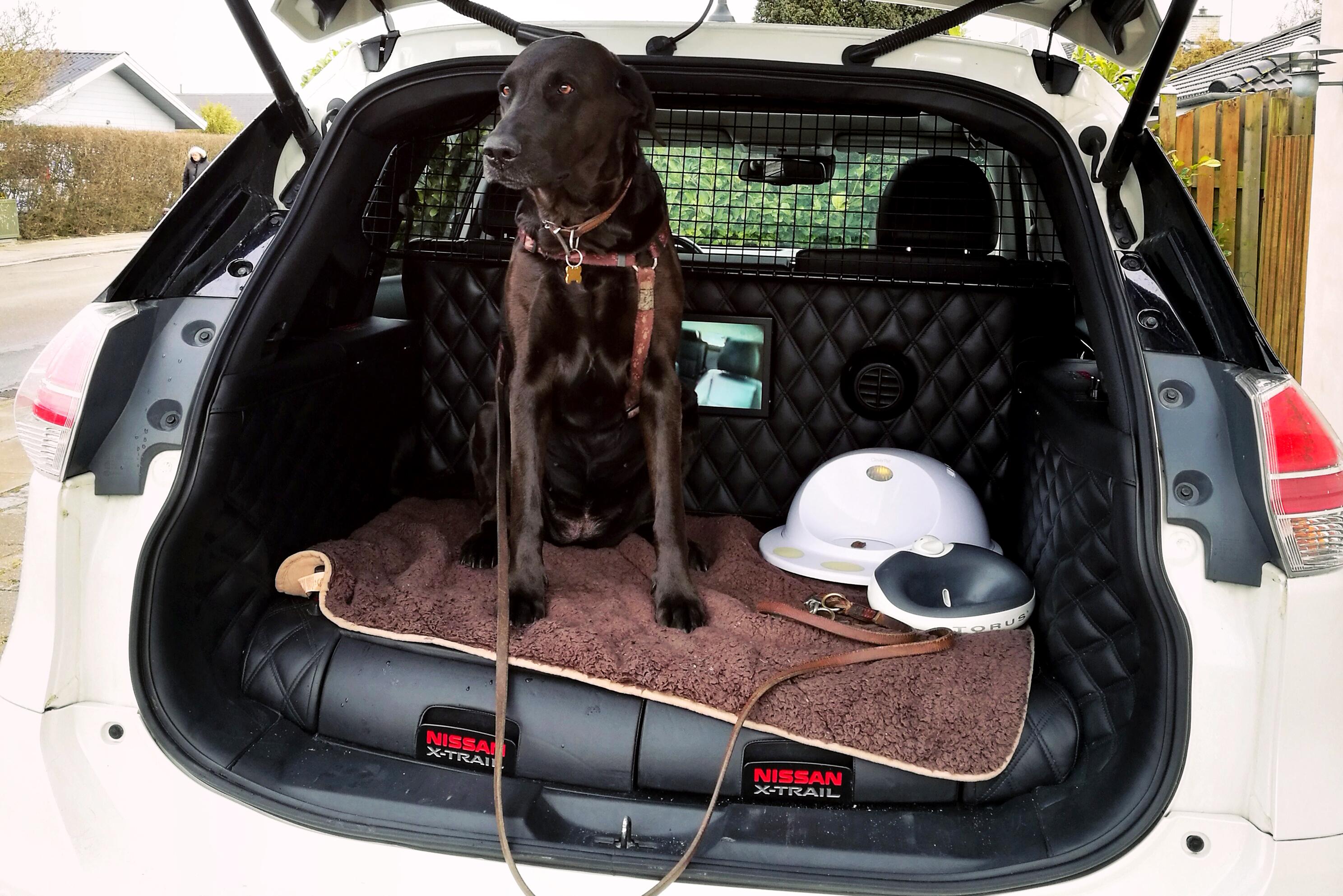 vi pr ver sk r nissan x trail bygget til hunde. Black Bedroom Furniture Sets. Home Design Ideas