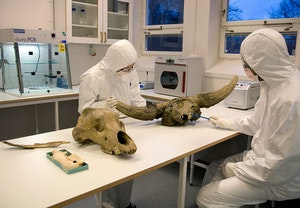 Centrum for paleogenetik i stockholm djurhuvud uca7nrae5zwnpvqc9dapla