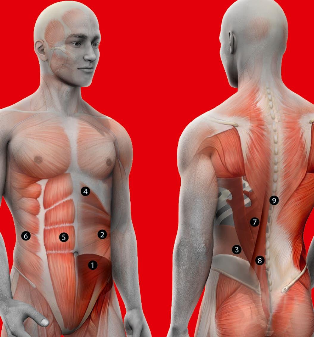 vilka muskelgrupper ska man träna