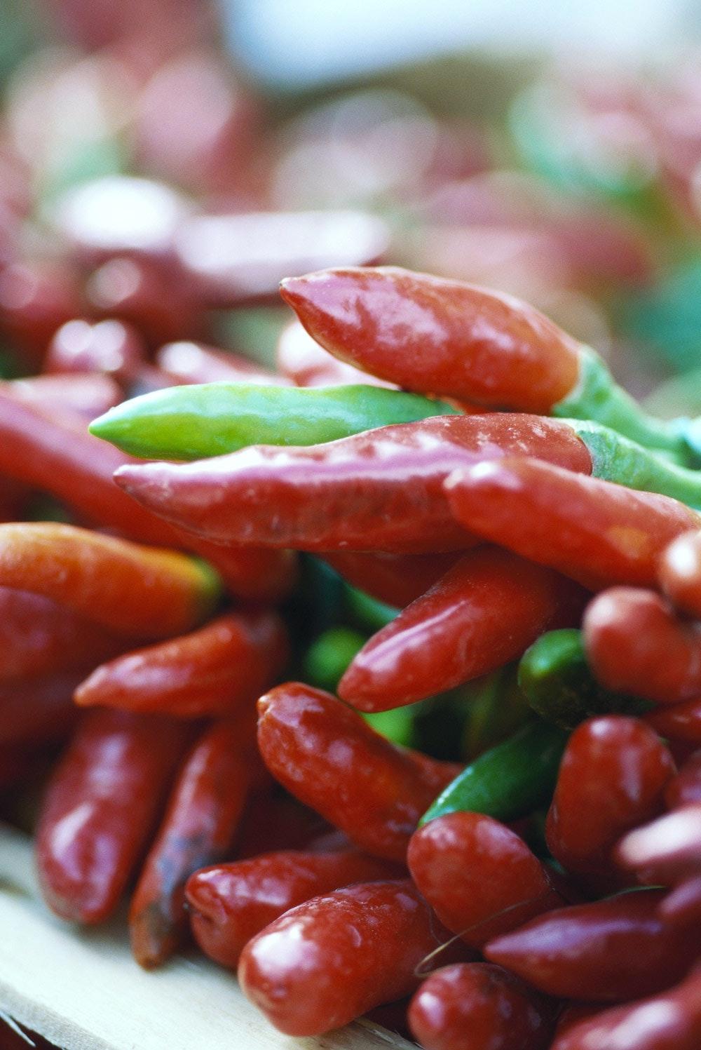 ondt i maven af chili