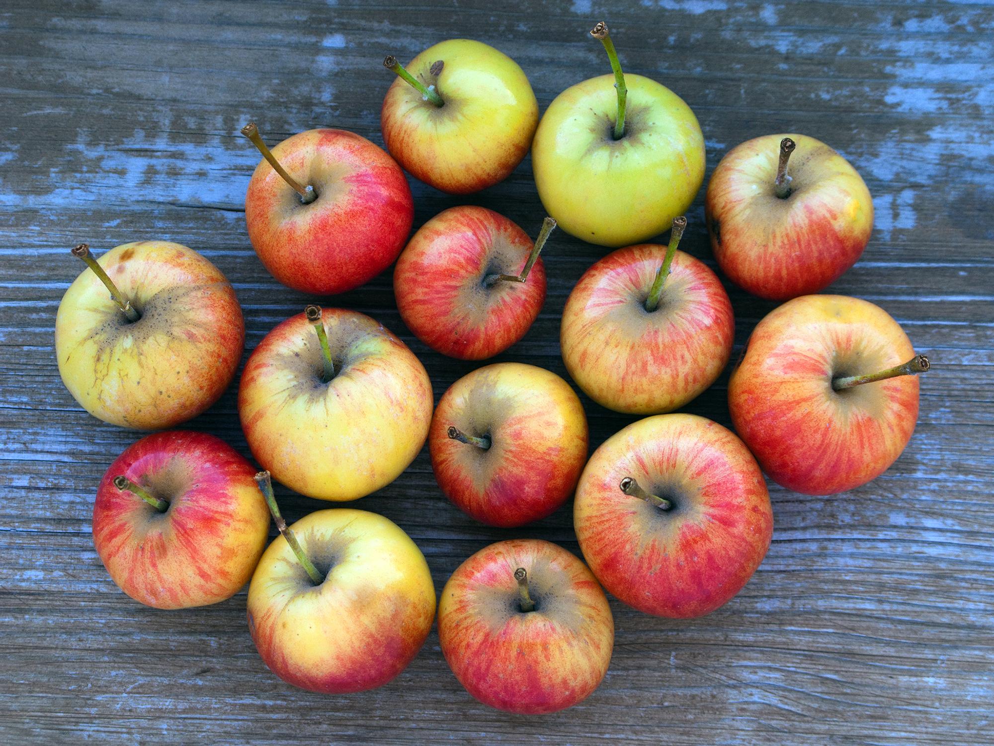 artikler feder frugtsukker lige sa meget som almindeligt sukker