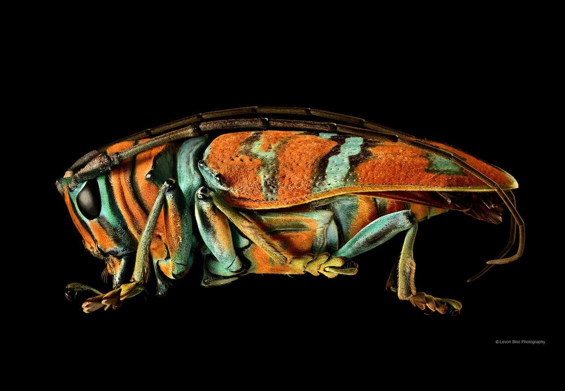 8000 Makrobilleder Per Insekt Digitalfoto Dk