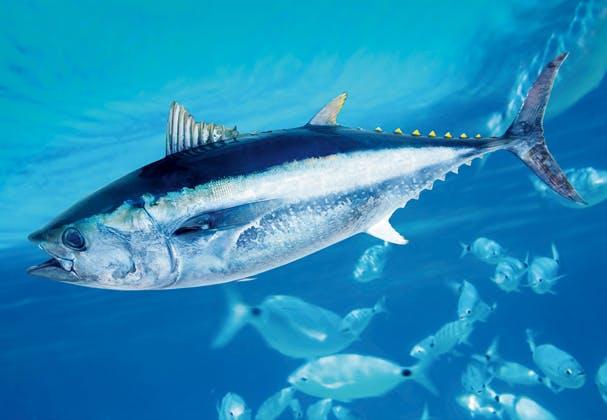 Maailman Nopein Kala