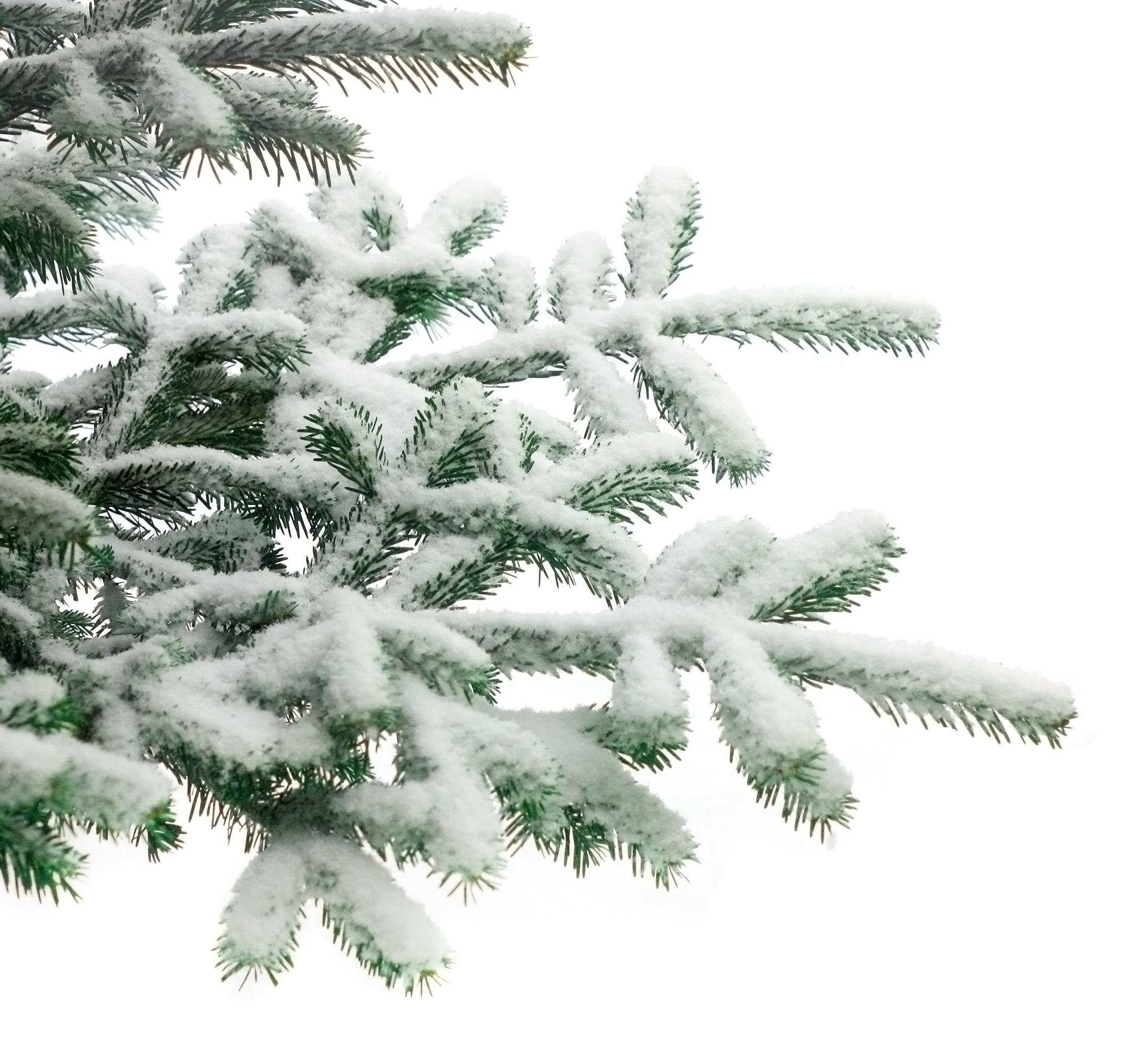 Hoeveel naalden heeft een kerstboom for Hoeveel traptreden heeft een trap