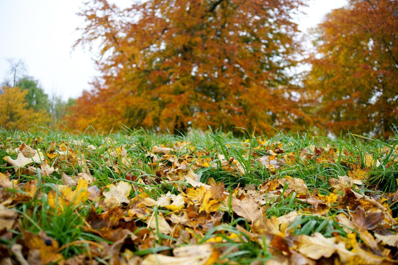 Efterår: Hvorfor falder bladene af? | Illvid.dk