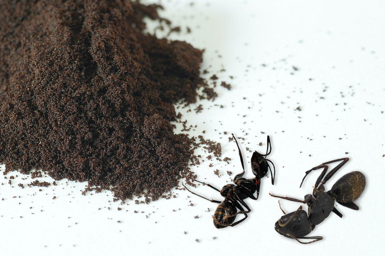 Kaffesump mot myror