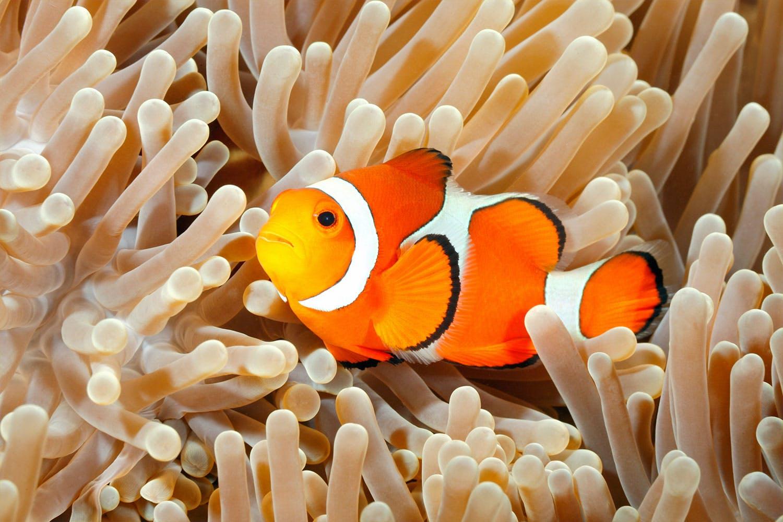 dyr sjodyr fisk elektrisk al hvordan kan en elektrisk al gi stot