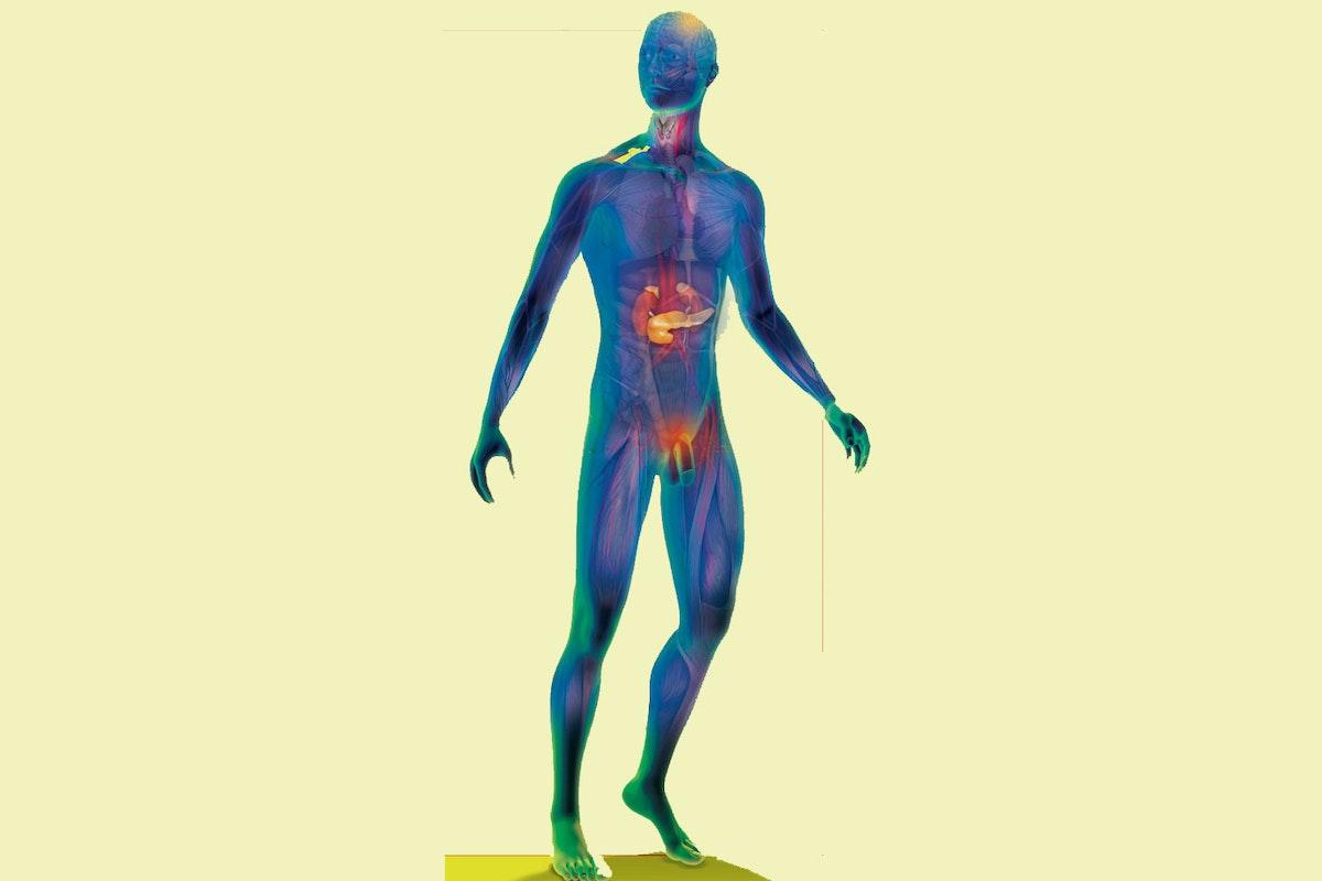 hormoner i kroppen tilfredsstille