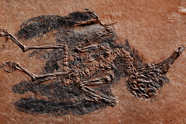 Fossiili