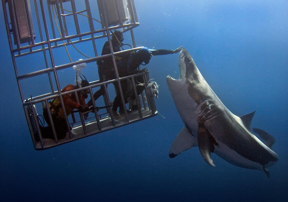 svømme med hajer bog