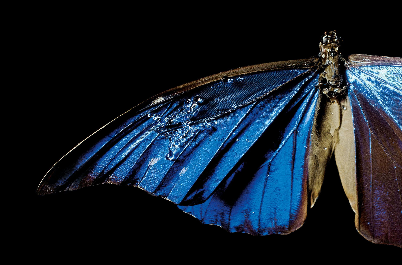 trådløs sommerfugl