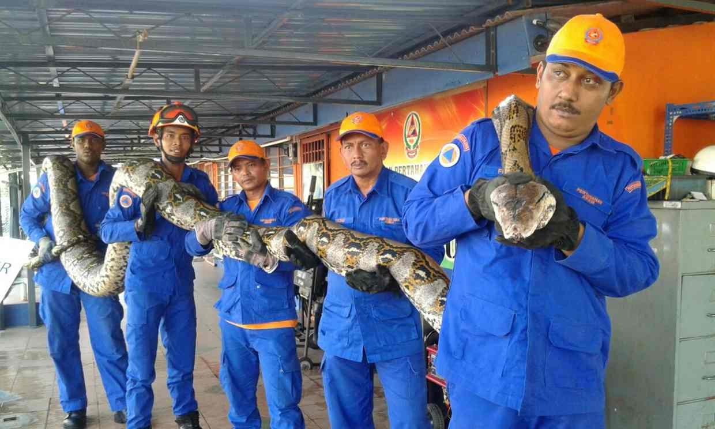 verdens største slange fundet død