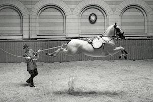 Fotografi stockholm 1953 spanska ridskolan v1yrlwu17iq6dsrgt8qshw