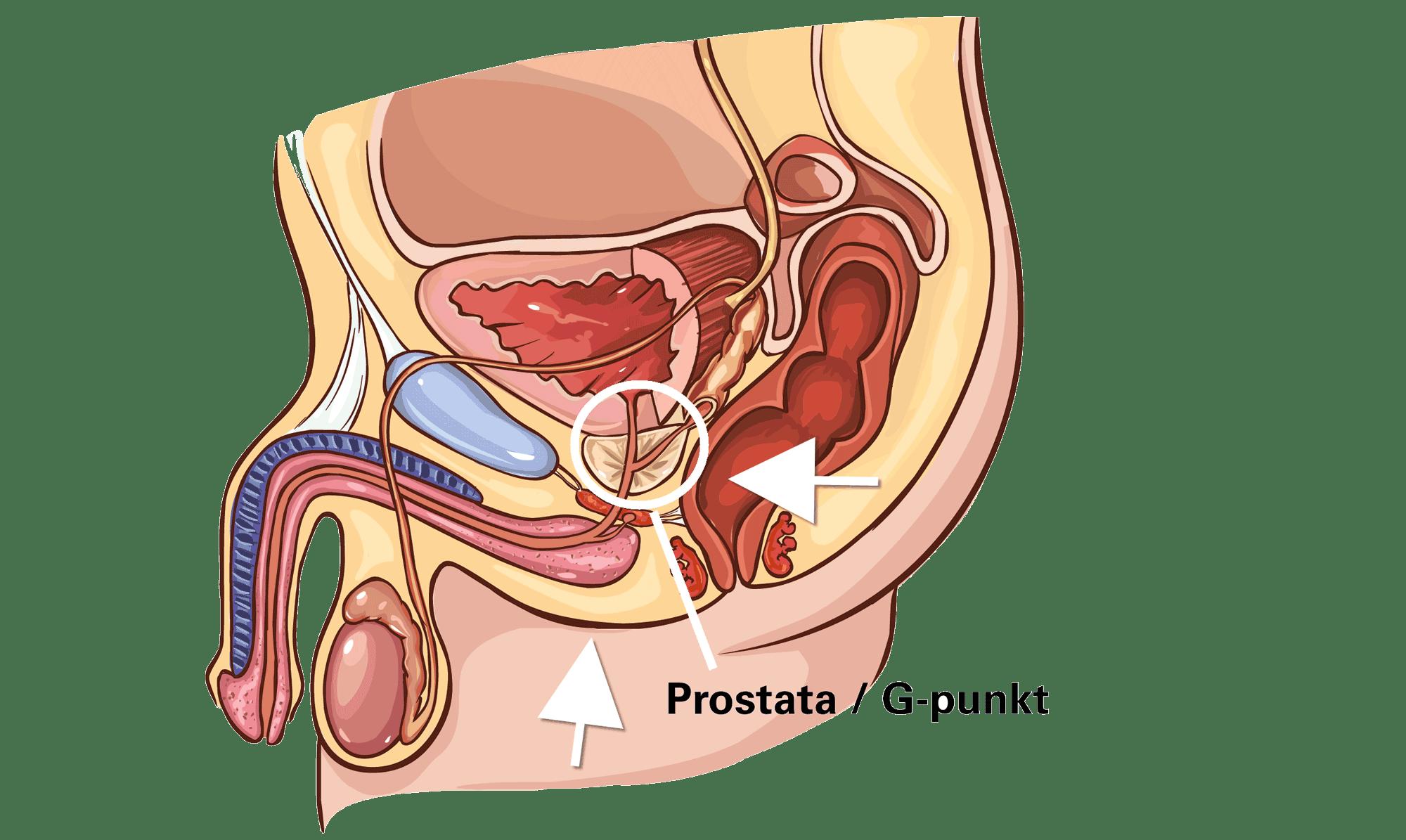 prostata udløsning