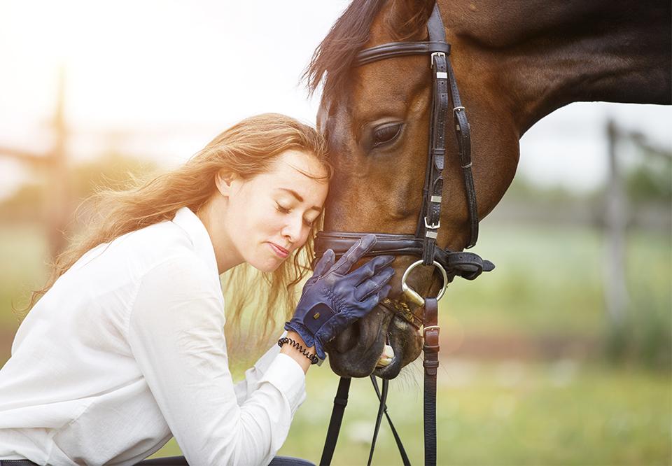 Heste og pige sex sex