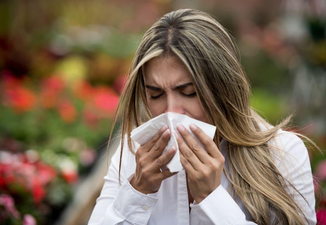 linser och pollenallergi