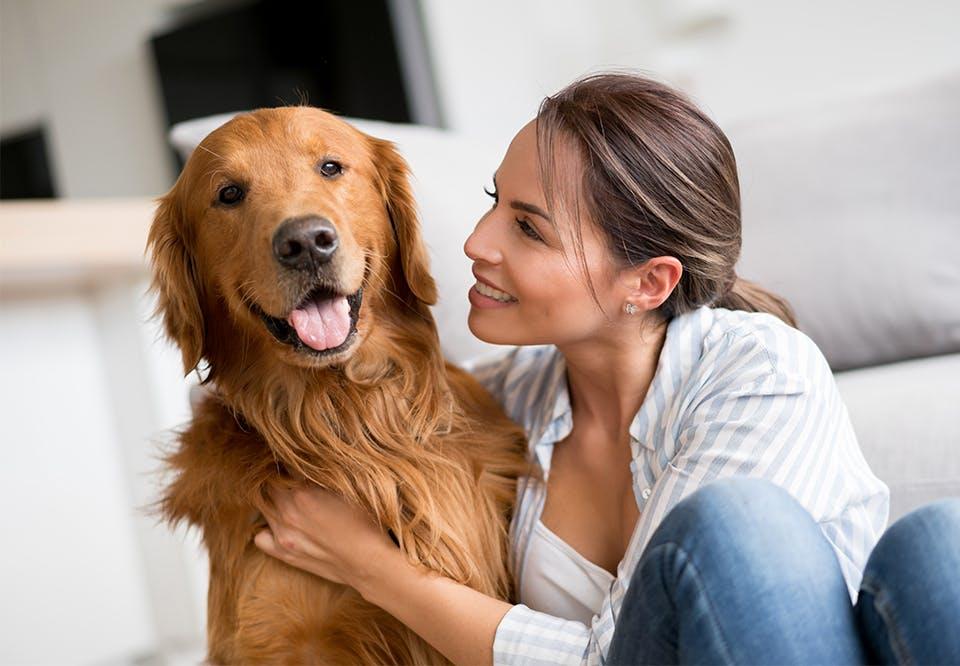 Dating hundevenner