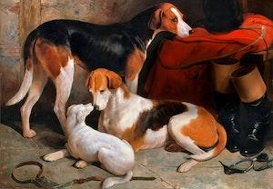 Hundar foxhound william barraud ndzqdnzrrrez1z qezs qq