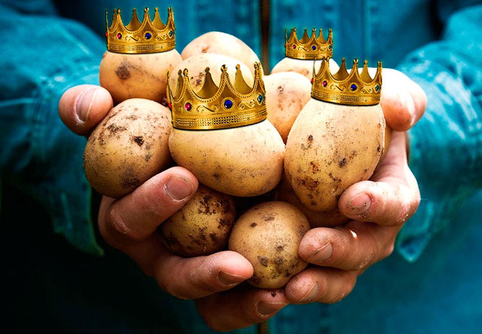 Sådan Blev Kartoflen Europæernes Vigtigste Spise Historienetdk