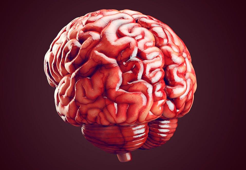 Hvad bruger vi lillehjernen til?   Illvid.dk