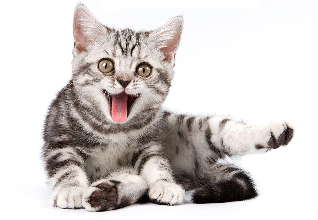 katte elsker dating website langsom dating abe bar glasgow