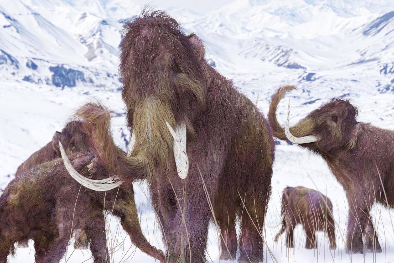 mammut fakta