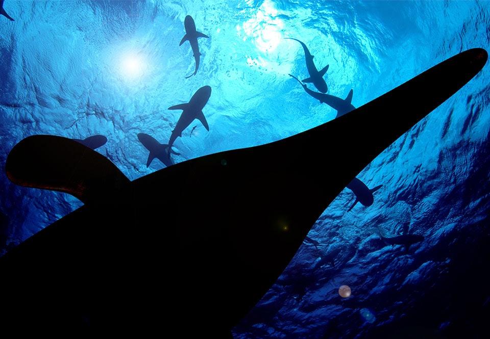 navne på havdyr