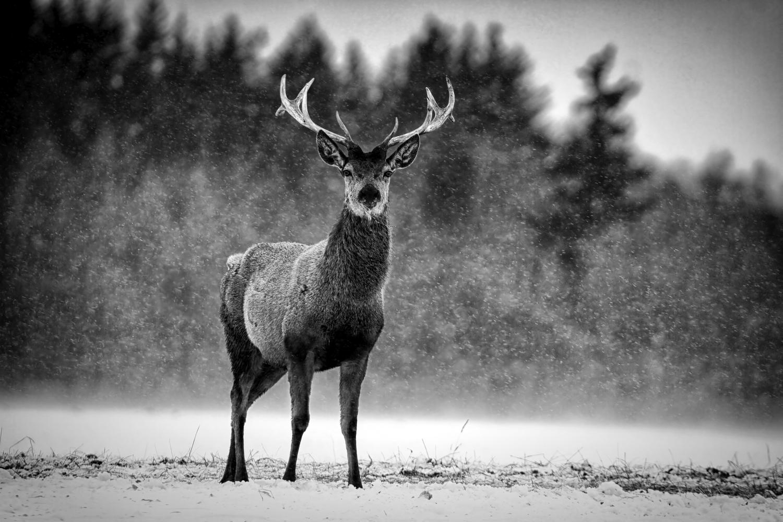 Sort hvitt bilder natur