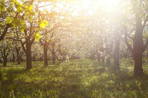 Træer i modlys