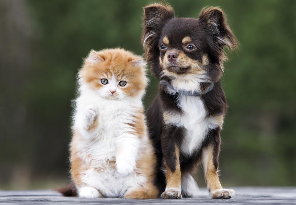 test hvilken hund passer til mig